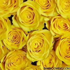 Fresh Cut Yellow Roses, Flower Delivery, Bouquet-Event-Party-Diy-B ulk (24 Roses)