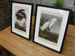 Vintage Audubon Prints- Egret Heron 1950s MacMillan ornithology wading birds