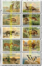 Heinrich Harder Dinosaur Prehistoric Paintings - Collectable Postcard Set # 2