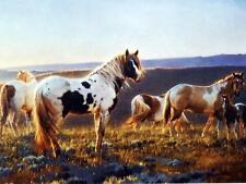 "Nancy Glazier 'Welcome to the Dawn"" Horse Colt Art Print 12"" x 9"""