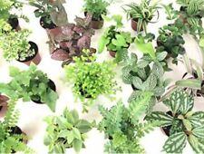 Terrarium Paludarium plants various species Live Plants