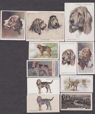 11 Different Vintage Otterhound Tobacco/Cigarette Dog Cards