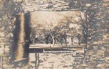 Cambridge Massachusetts~Harvard College Campus~Birch Bark Peel-Back~1905 RPPC