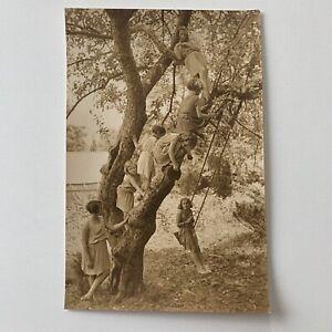 Vintage Fine Art Gelatin Photograph Children Playing In Tree Art Deco HR Cremer