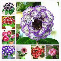 Gloxinia Bonsai Seed Sinningia Speciosa Flower Home Garden Gloxinia Plant 100pcs