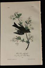 AUDUBON'S BIRDS of AMERICA -WOOD PEWEE FLYCATCHER- First Edition Octavo Plate 64