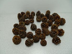 Zapfen Pinus Mugo Tannenzapfen Deko kleine Zapfen 45 Stück