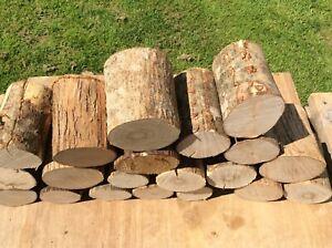 10 BARGAIN Decorative logs, display,hardwood BUDGET LOGS (loose bark)