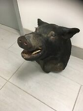 boar head taxidermy