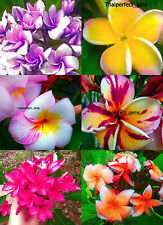"""Cutting/Grafted plumeria/Plants/""""Mixed 6 Types"""" /10-12 inches"""