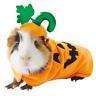 Guinea Pig Small Pet Pumpkin Holiday Halloween Costume Cute Funny Gift Free Ship