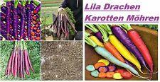 25x Lila Drachen Karotten Samen Hingucker Selten Gemüse essbar gesund Garten #97