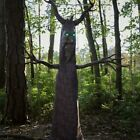 🔴 Lifesize Deadly Woods Spooky Haunted Tree Animated Spirit Halloween Prop