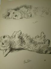 Lucy Dawson 1937 Sealyham Terrier Dog Print Vintage 33436 Bustle Biddy