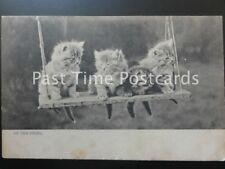 c1903 Tucks Animal Stidies - Four Kittens sitting 'ON THE SWING' Undivided Back
