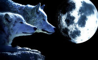 """perfect 36x24 oil painting handpainted on canvas""""Two wolves,moon""""N4310"""