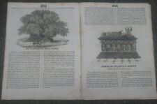 1834 RIVISTA 'L'ALBUM' CASTAGNO SECOLARE DELL'ETNA. CARLO VI. FILIPPO L'ARDITO