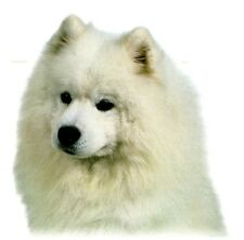 SAMOYED DOG Head- Twelve identical 6 inch Fabric Squares for Quilt or Sew