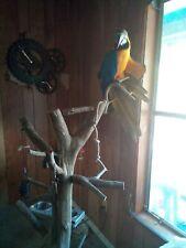 Bird Tree Perch