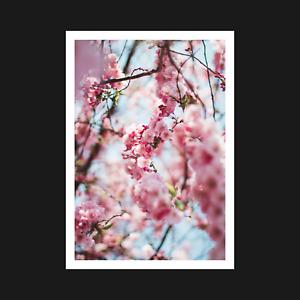 Cherry Blossom Poster / Print - Nature Tree Flower Wall Art Decor - A5 A4 A3 A2