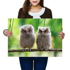 A2 | Cute Baby Owls Bird Wild Nature - Size A2 Poster Print Photo Art Gift #2322