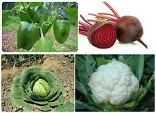 4 Hybrid Vegetable Seeds Kit – Capsicum+Beetroot+Cabbage+Cauliflower - 100 Seeds