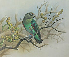 South African Signed Print by Simon Calburn Cape Forest Chortler 1989