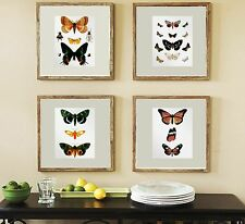 Wall hanging Set of 4 Vintage Butterfly Prints Bedroom living room home decor