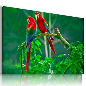 BIRDS PARROTS Wild And Domestic Animals Canvas Wall Art Picture AN313  MATAGA