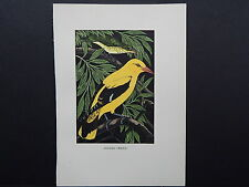 BIRDS, ERIC FITCH DAGLISH, Engraving, c. 1948 Golden Oriole #04
