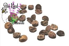 Hawaiian Baby Woodrose Seeds - Argyreia Nervosa - Fresh - Untreated Seeds