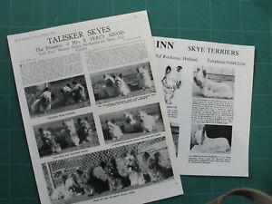 SKYE TERRIER KENNEL CLIPPINGS x 35 1950s-2000s