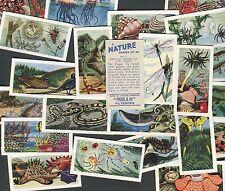 "AMALGAMATED TOBACCO 1958 SET OF 25 ""A NATURE SERIES"" CIGARETTE CARDS EX+"