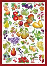 Schmidt Spiele Fruits 1000 Piece Food Countryside Collection Jigsaw Puzzle