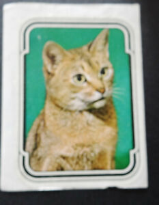 Ferrero Duplo Sammelbild Abessinier-Katze Unsere liebsten Freunde von 1980