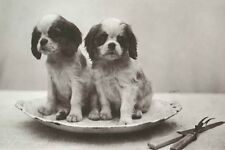 Cavalier King Charles Spaniel Dog Puppies Photo 8 Large New Blank Note Cards