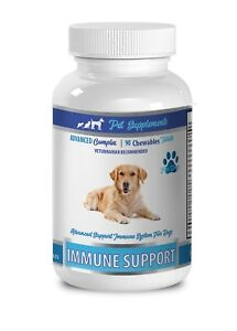 immune support dogs - IMMUNE SUPPORT FOR DOGS - mushrooms for dogs
