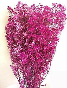 Baby's Breath - Preserved Live Plants - Red