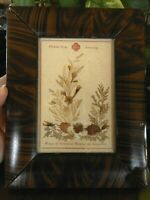 Dried Flowers Jerusalem 1917 Picture 1920's Framed Antique Farmhouse 6.5 x 8.5""