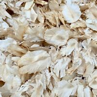 Feather Ivory Biodegradable Natural Wedding Confetti Real Dried Flower Petals 1L