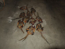 """10 Ring-neck Pheasant Skins w/Tail Feathers, """"Seconds"""""""
