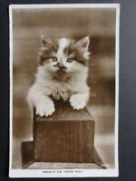 CATS: Kitten on top of a Post WHAT'S UP, YOUR WAY? - RP Postcard by Valentine's