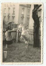 Frau mit Ziege, Geiß, altes Foto aus Crimmitschau um 1953