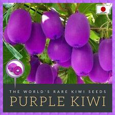 1000 Purple Kiwi Seeds, JAPAN Violet Bingo Fruit Seeds - Morado Kiwis Kiwifruit