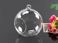 Clear Empty Hanging Glass Micro Landscape Plant Flower Vase Terrarium Pot 80mm