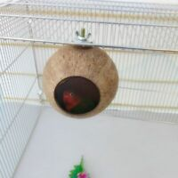 Natural Parrot Nest Coconut Shell House Cage Feeder Parakeet Birds Hamster Toys