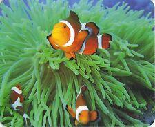 Mauspad Edition Colibri: Annemonenfische im Riff - auch: Nemo der Clownsfisch