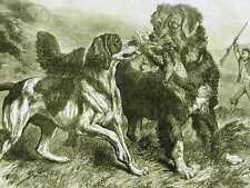 BIRD HUNTING w DOGS RETRIEVERS 1868 Antique Art Print Matted