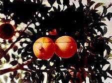 Affiche Pliée 68x138cm LES SAISONS DU PLAISIR - L' HIVER Mocky Audran Bacri EC