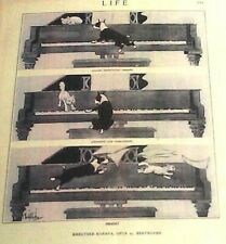 Boston Terrier Dog & Cat On A Grand Piano Early Life Magazine Reprint